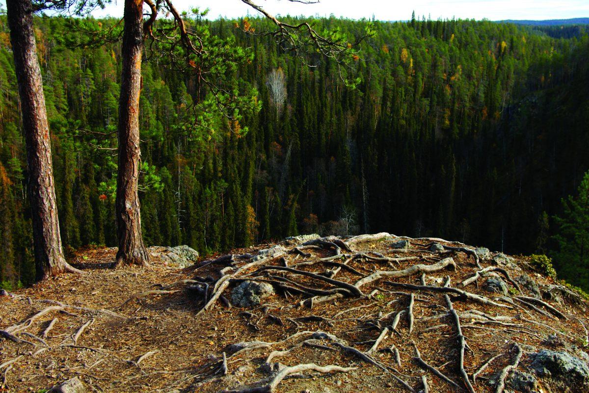 Taiteilijat metsän, ilmaston ja vastuullisuuden puolesta