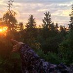 Blogi: Kestävää luomista metsän keskellä